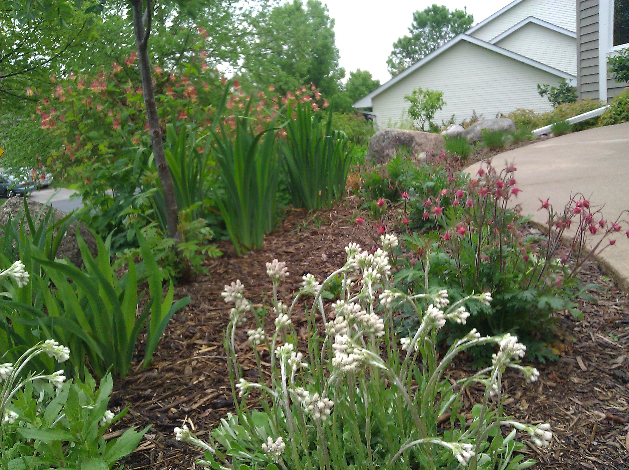Plantings ecoscapes for Garden shrubs